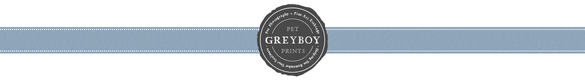 Greyboy Pet Portraits