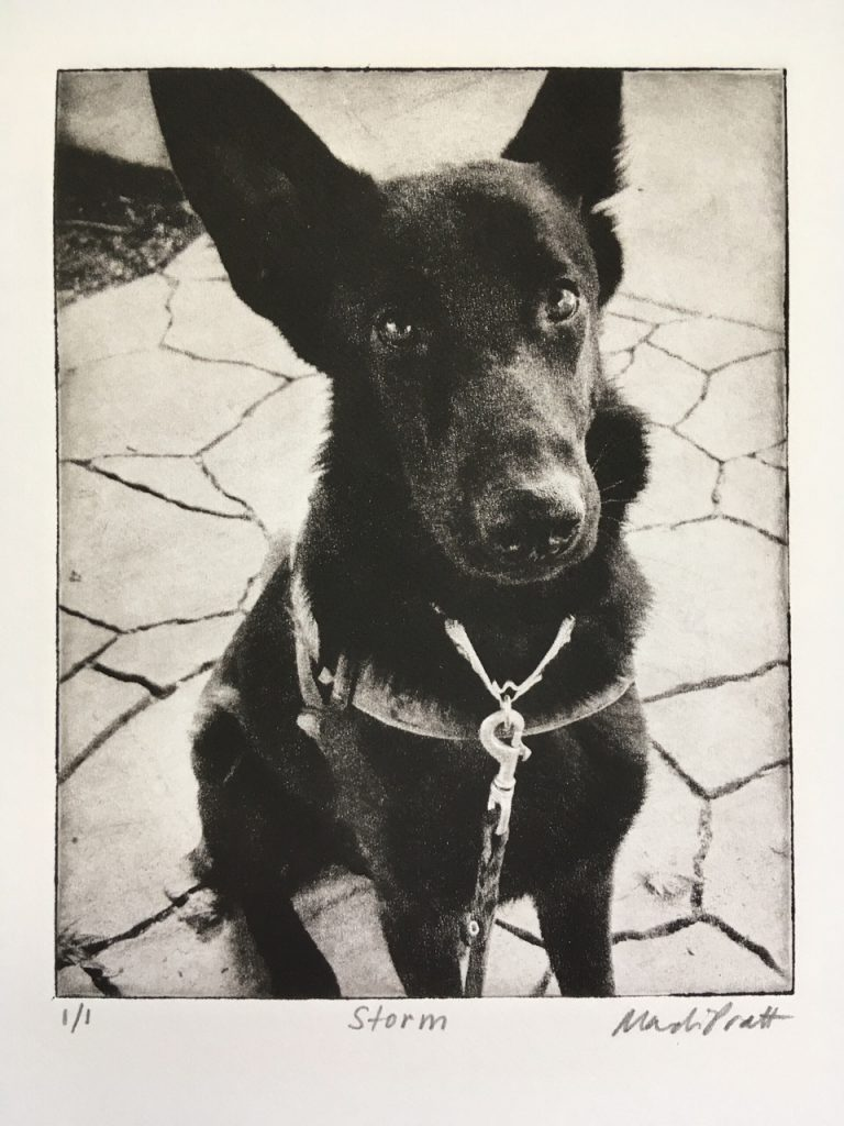 Shepherd-Dog-Portrait_Art