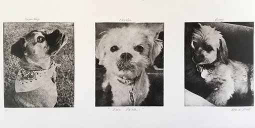 Dog-Art-Collage