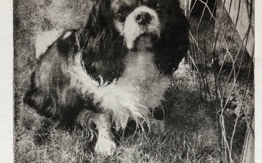 Handmade Dog Portraits From a Photo