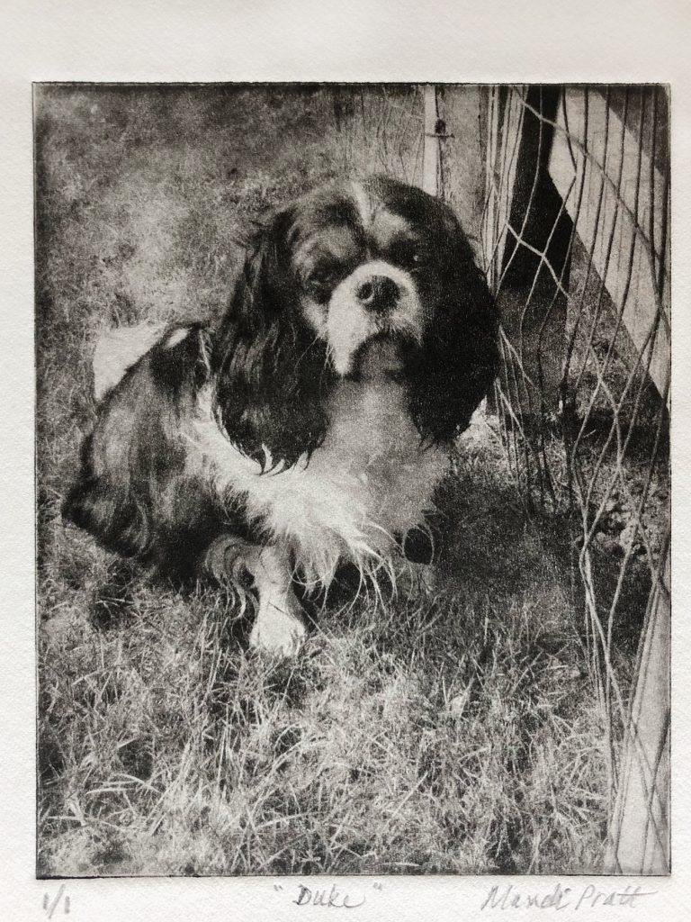 Custom-Dog-Portrait-Duke-Cavalier