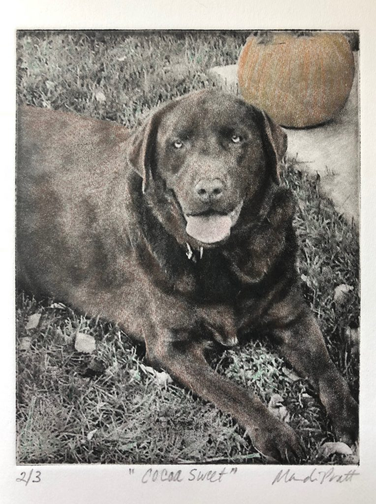 Dog-Art-with-Color-Cocoa-Sweet-0818