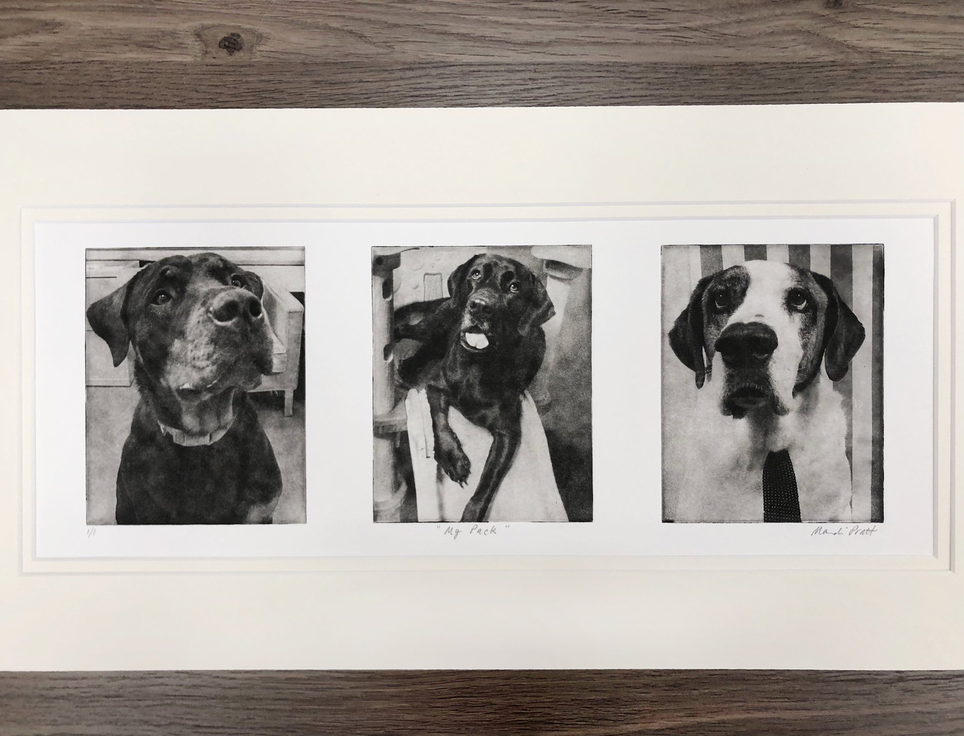 Dog Portrait Collage of 3 cute dogs