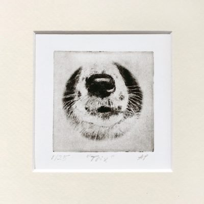 Border Collie nose drawing and etching pet portrait for gift