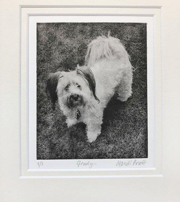 Dog Portrait from Photo | Grady
