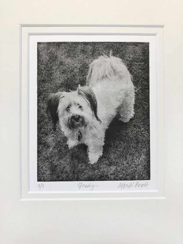 Black and white dog portrait of california dog by pet artist Mandi