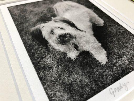 Closeup Detail of custom dog portrait from photo