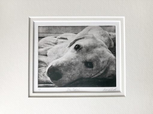 Dog Portrait Art LabradorD