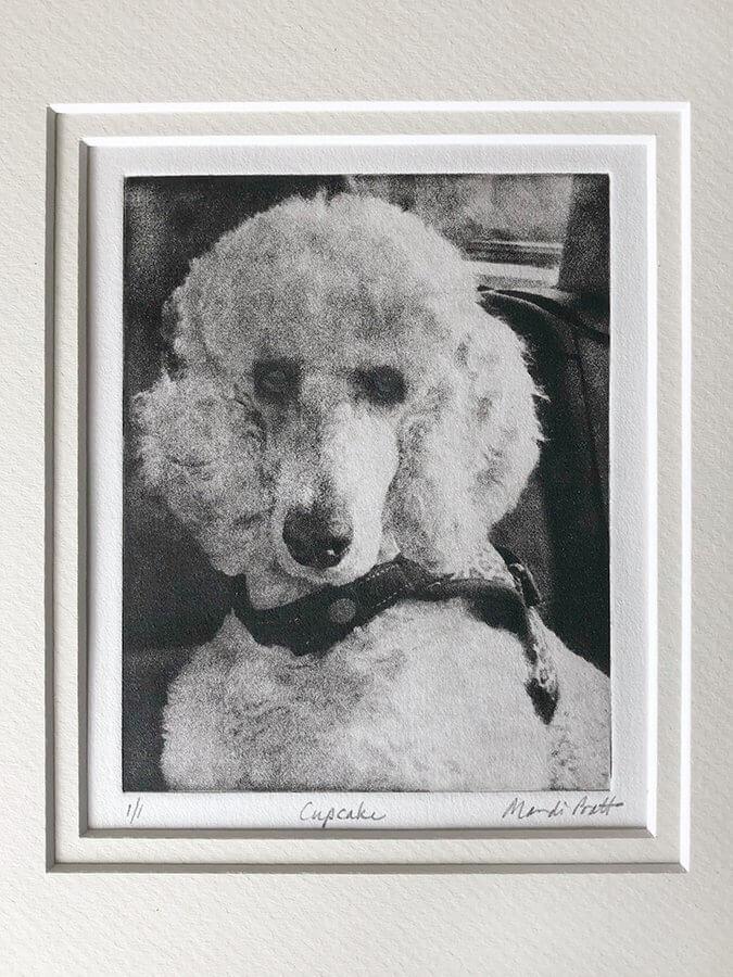 dog portrait art of poodle