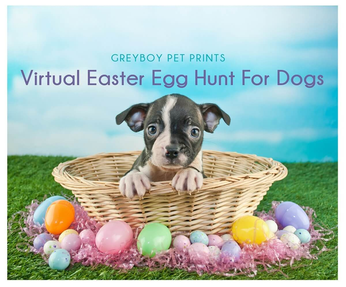 Virtual Egg Hunt for Dogs event
