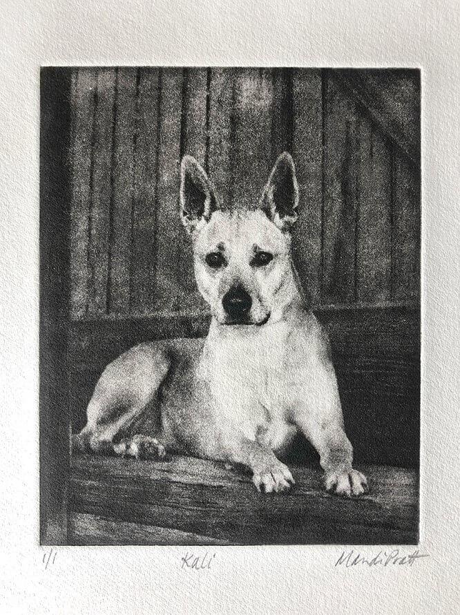 Dog Portrait for Heroes Dog Kali