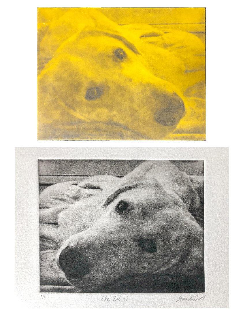Dog portrait art lab