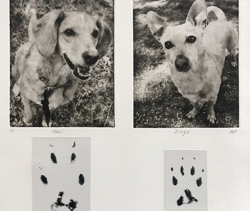 A Beautiful Way to Combine Paw Prints and Dog Collage Art