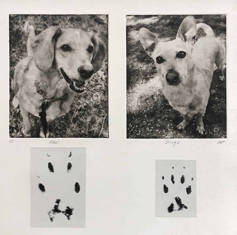 Dog Collage of cute dogs with their paw prints under art