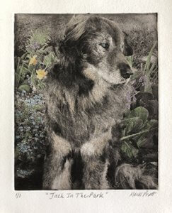 Remembering Dog Jack in the Park handcrafted pet portrait with color remembering dog Jack with art