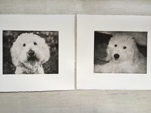 Puppy portrait and senior portrait together for dog art collage