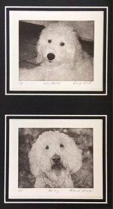 Two dog art portraits of doodle as puppy and as senior in one black mat