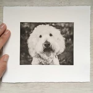 Adorable Doodle Dog Portrait Etching