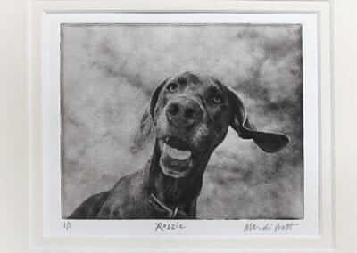 professional pet photographer seattle photo of cute weimaraner dog