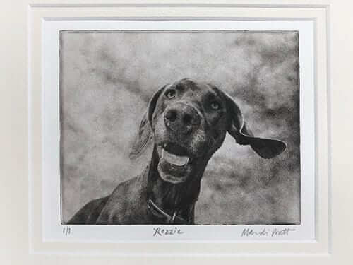professional pet photographer seattle photo of cute weimaraner dog