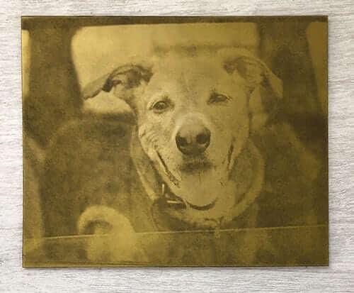 Etched Intaglio Plate for Custom Dog Art Print of cute dog in car window