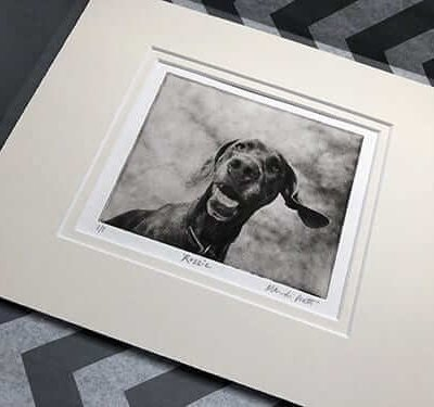 matted etched custom dog art portrait of weimaraner package
