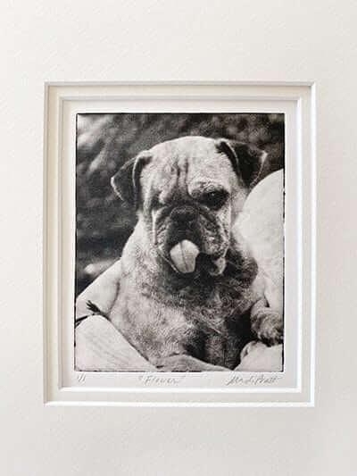 Cute dog portrait of pug as creative holiday portrait gift