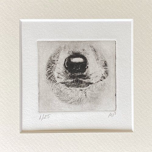 Jack Russell Portrait Dog Nose Print Drawing Etched