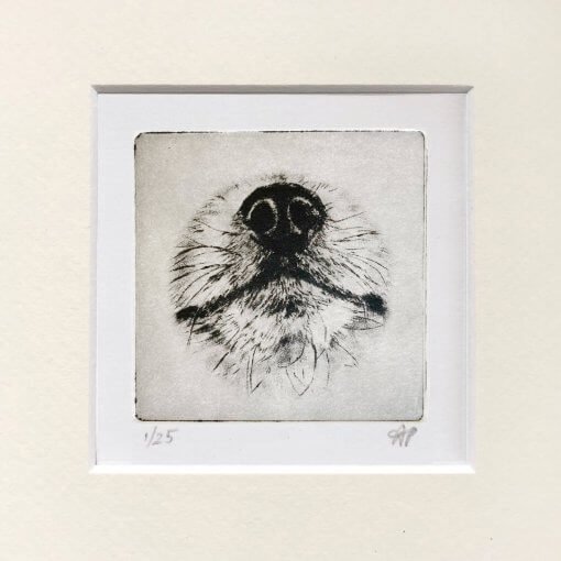 Pomeranian-Portrait-Dog-Nose-Print
