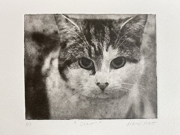 Bucket List For Cat Cleo