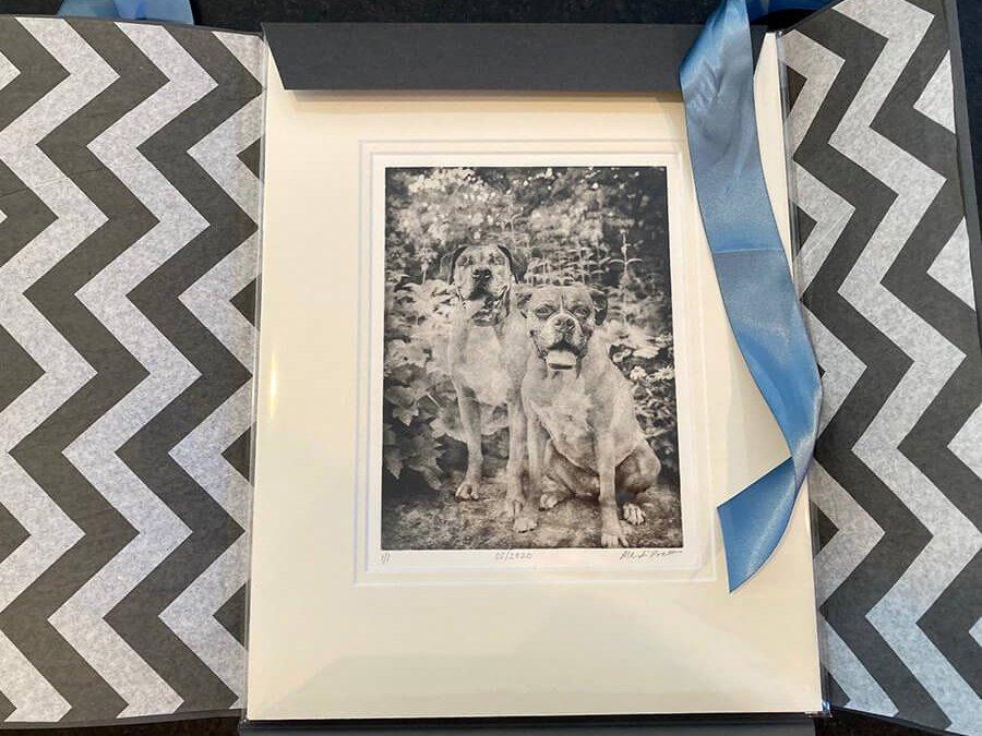 Unwrapping Dog Portraits for Duke and Georgia