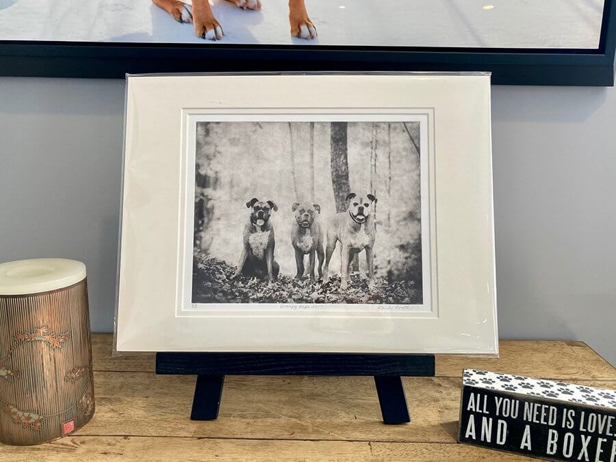 Dog Portrait Etching of 3 boxer dogs sitting on a table easel at home