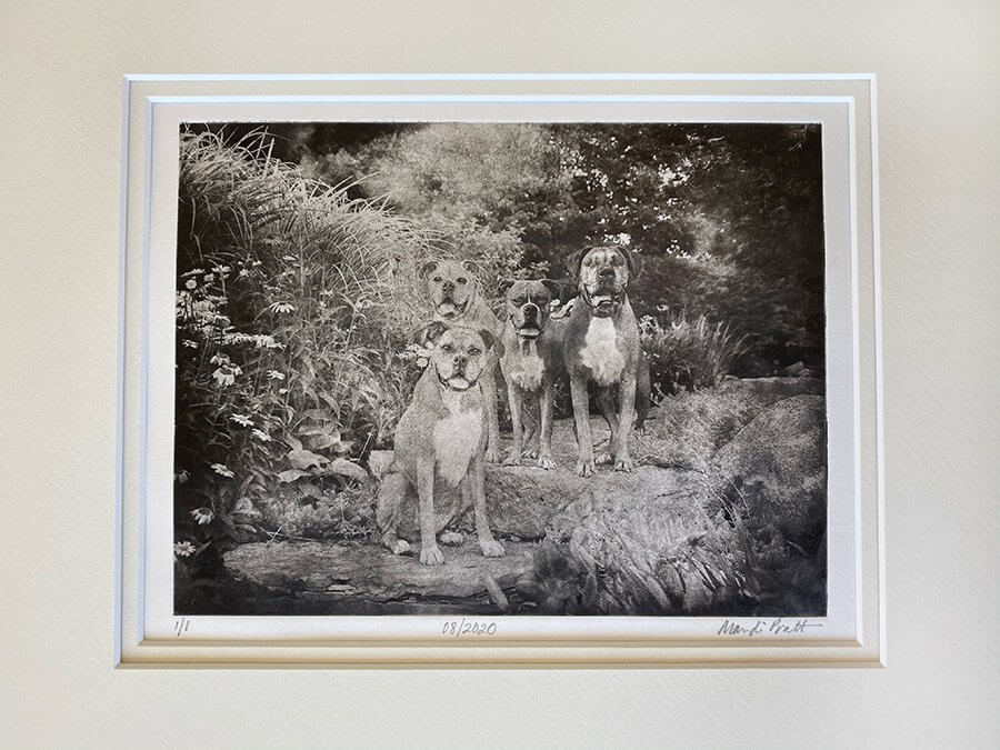 Dog-Portraits-Four-Dogs-Sitting-Pretty-Etched-Art