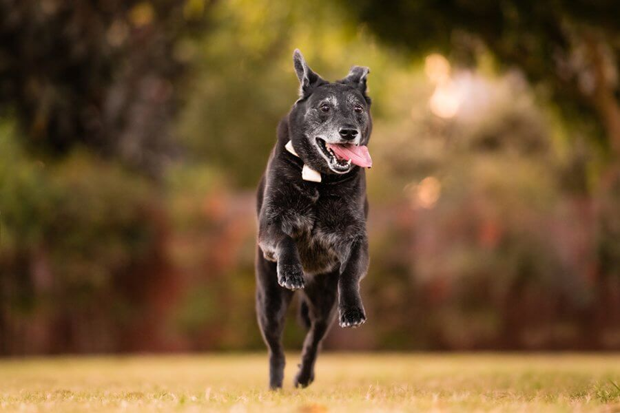 Pet Insurance For My Dog | Greyboy Pet Portraits