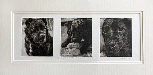 Best Photos For Custom Dog Portraits?