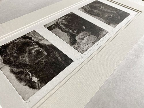 Best Photos for Custom Dog Portrait