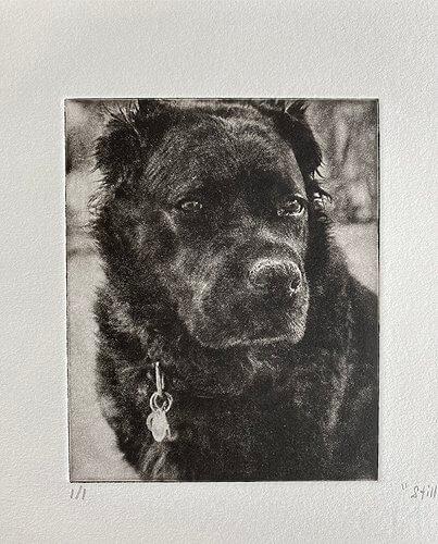 Etched dog art of black dog